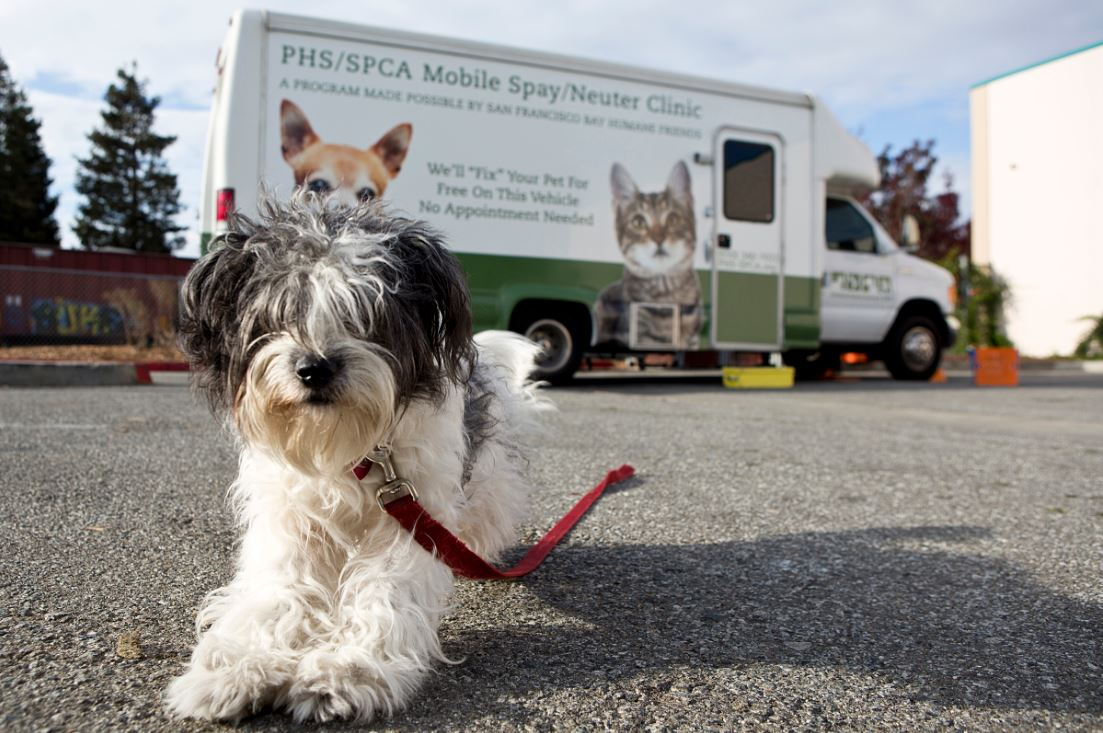 free spay/neuter clinic – san bruno chamber of commerce